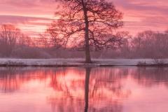 shelford sunrise -8589
